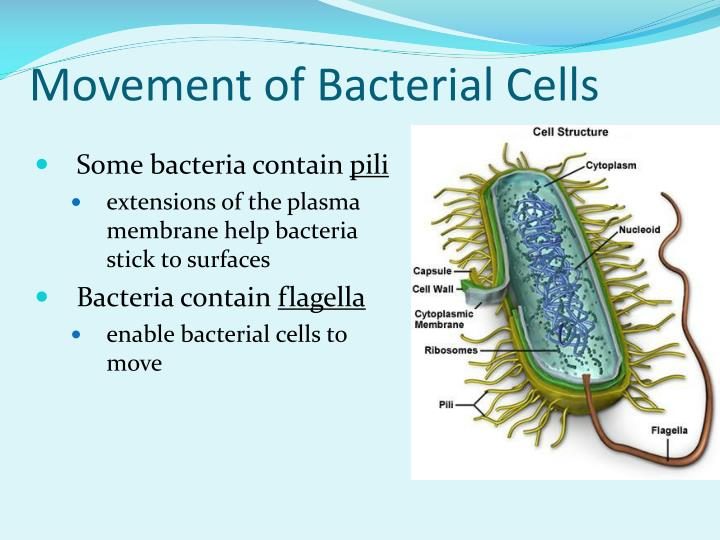 Movement of Bacterial Cells