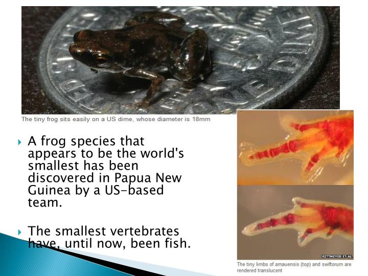 A frog species that appears to be the world's smallest has been discovered in Papua New Guinea by a US-based team