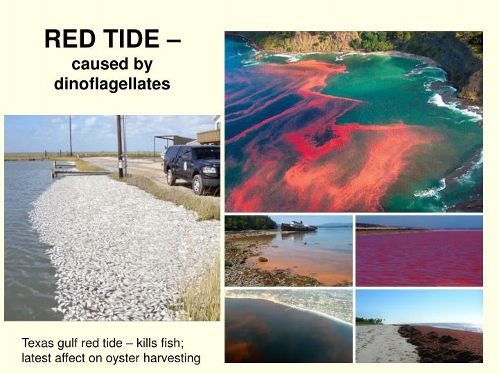 RED TIDE –