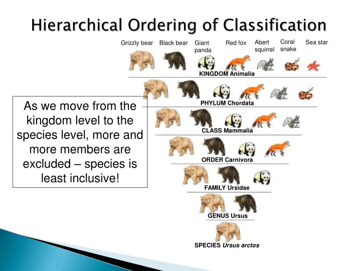 Hierarchical Ordering of Classification