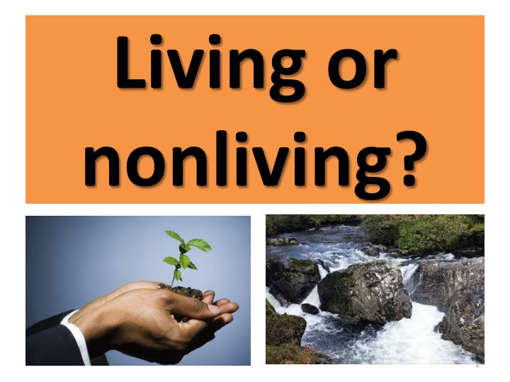 living or nonliving n.