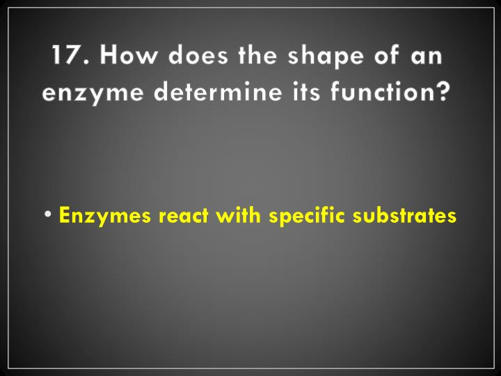 17. How does the shape of an enzyme determine its function?