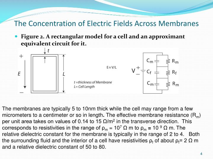 The Concentration of Electric Fields Across Membranes