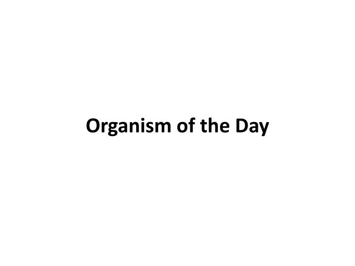organism of the day n.