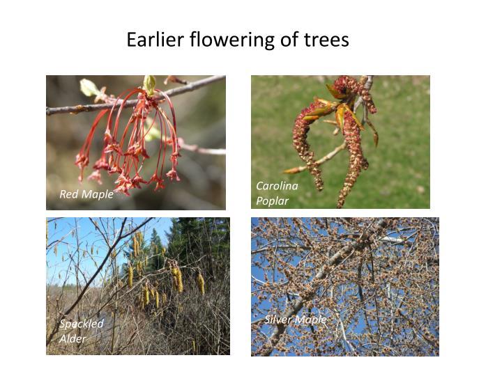 Earlier flowering of trees
