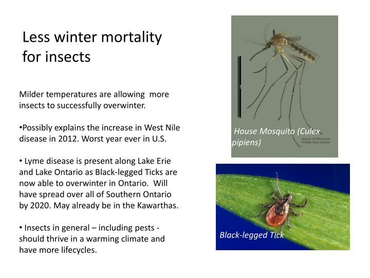 Less winter mortality for insects