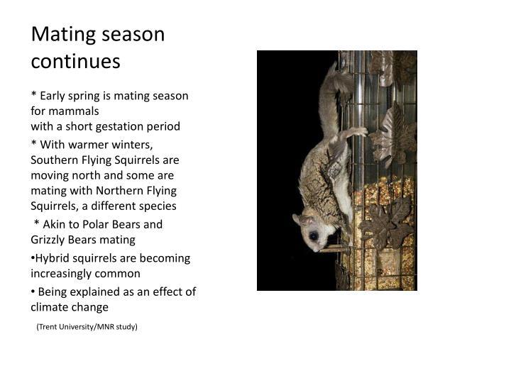 Mating season continues
