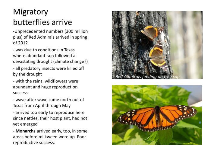 Migratory butterflies arrive