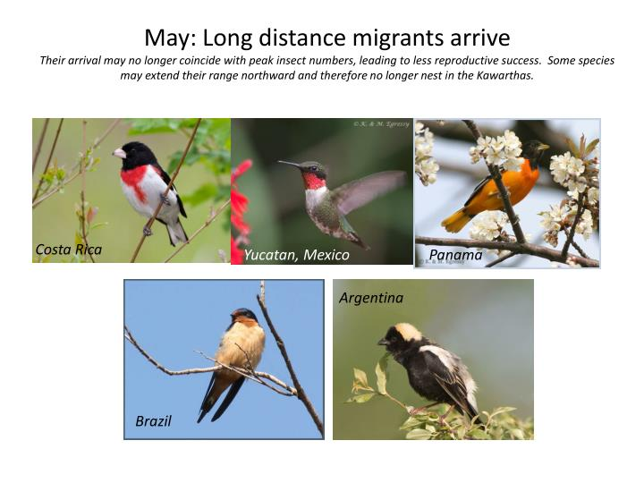 May: Long distance migrants arrive