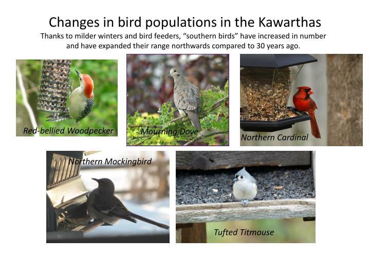 Changes in bird populations in the Kawarthas