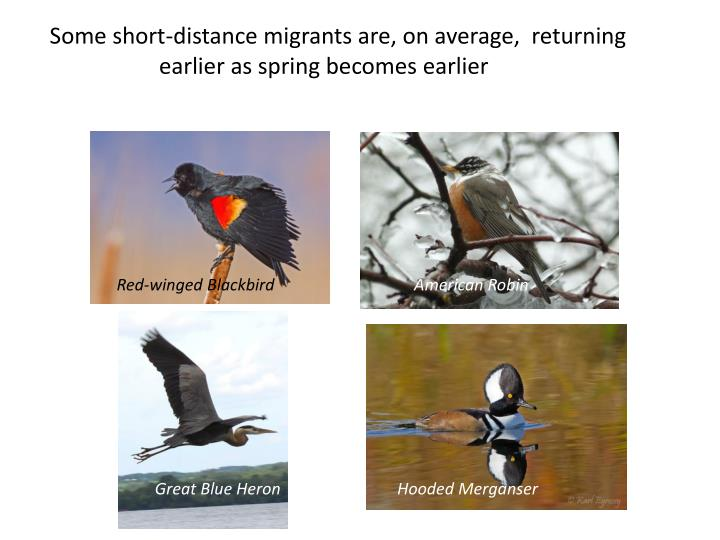 Some short-distance migrants are, on average,  returning earlier as spring becomes earlier