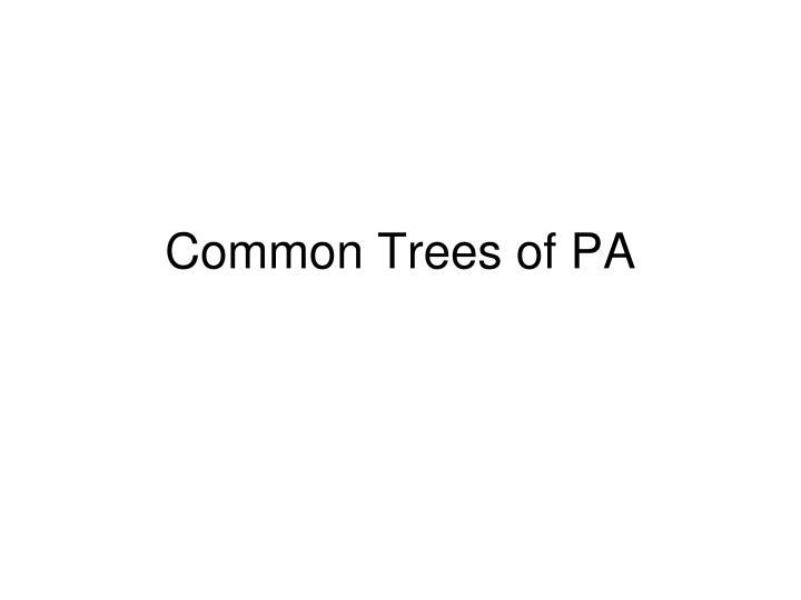 common trees of pa n.