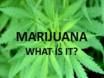 marijuana what is it