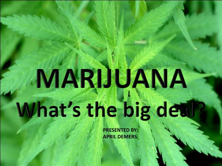 marijuana what s the big deal