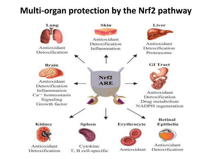 Multi-organ protection by the Nrf2 pathway