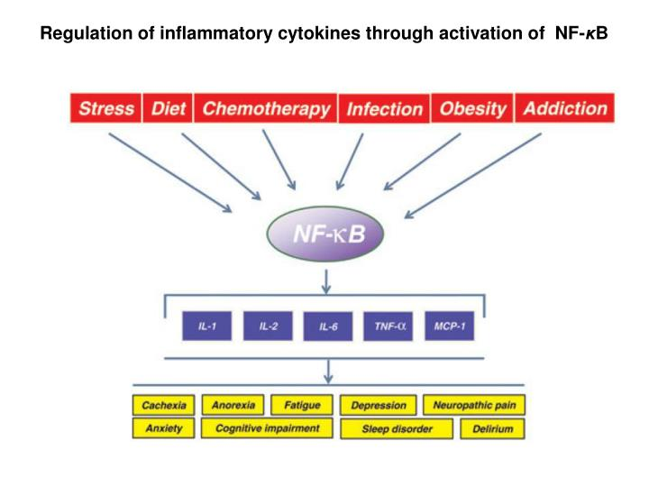 Regulation of inflammatory cytokines through activation of  NF-