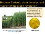 norman borlaug plant breeder and father of the green revolution