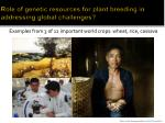 role of genetic resources for plant breeding in addressing global challenges