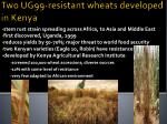 two ug99 resistant wheats developed in kenya