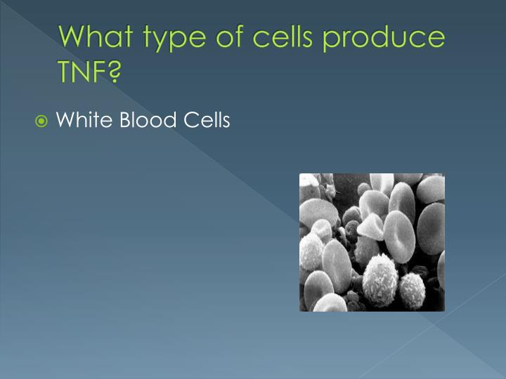 What type of cells produce TNF?