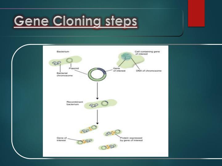 Gene Cloning steps