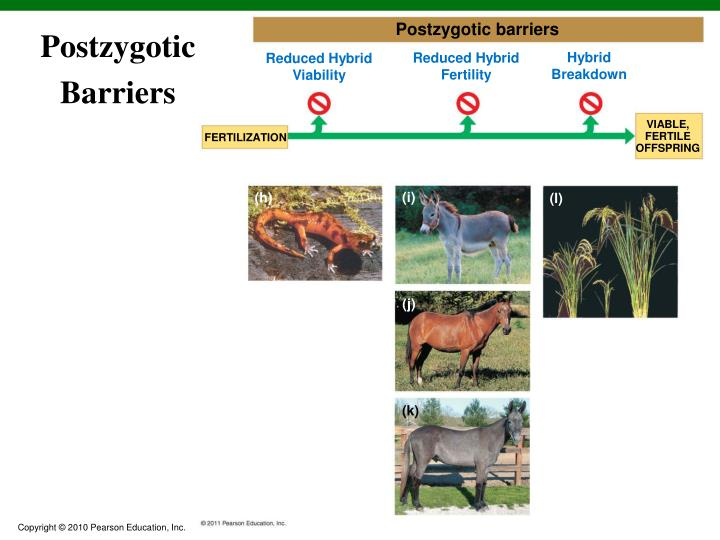 Postzygotic barriers