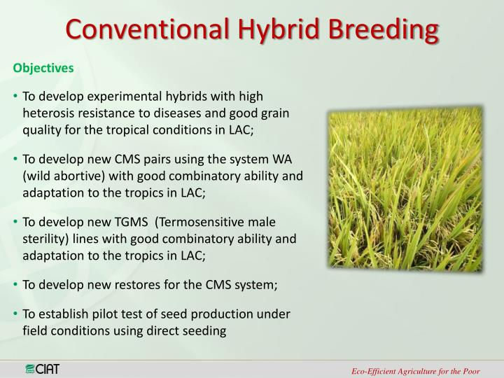 Conventional Hybrid Breeding