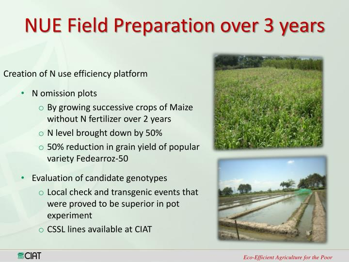 NUE Field Preparation over 3 years
