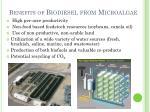 benefits of biodiesel from microalgae