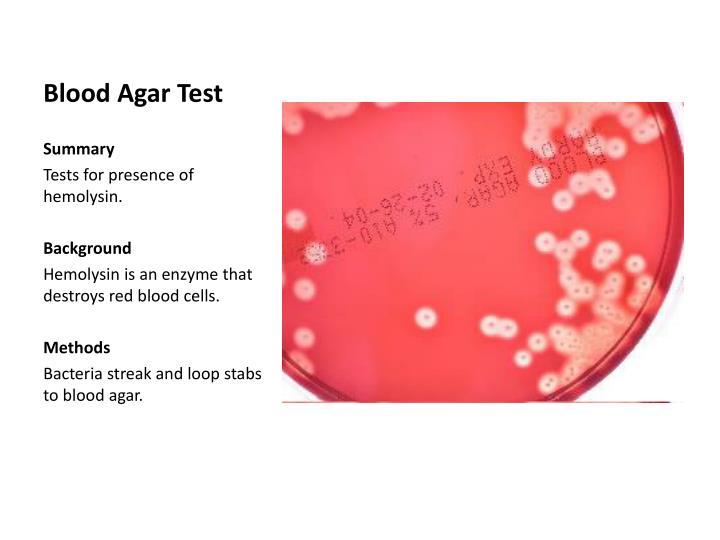 Blood agar test