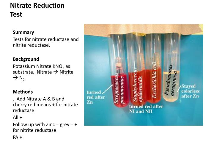 Nitrate Reduction Test