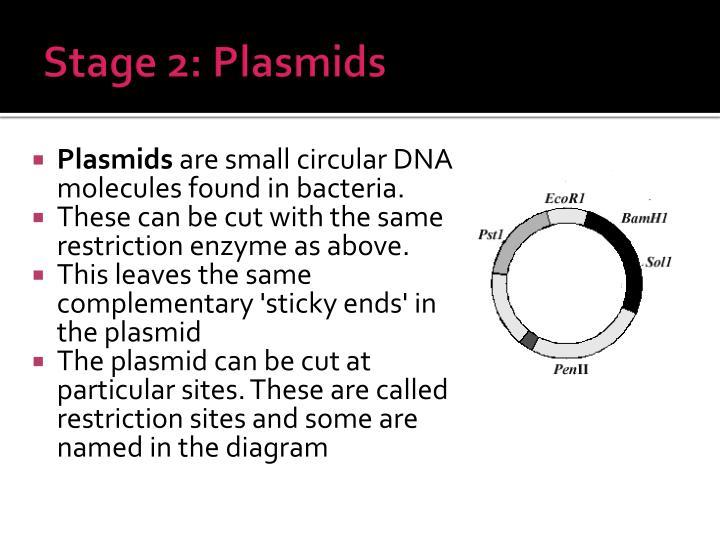 Stage 2: Plasmids