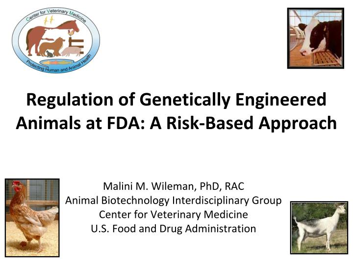 regulation of genetically engineered animals at fda a risk based approach n.