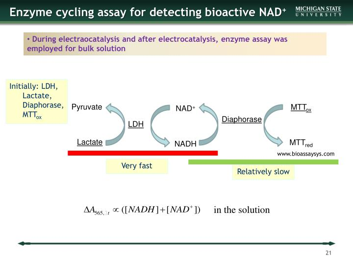 Enzyme cycling assay for detecting bioactive NAD