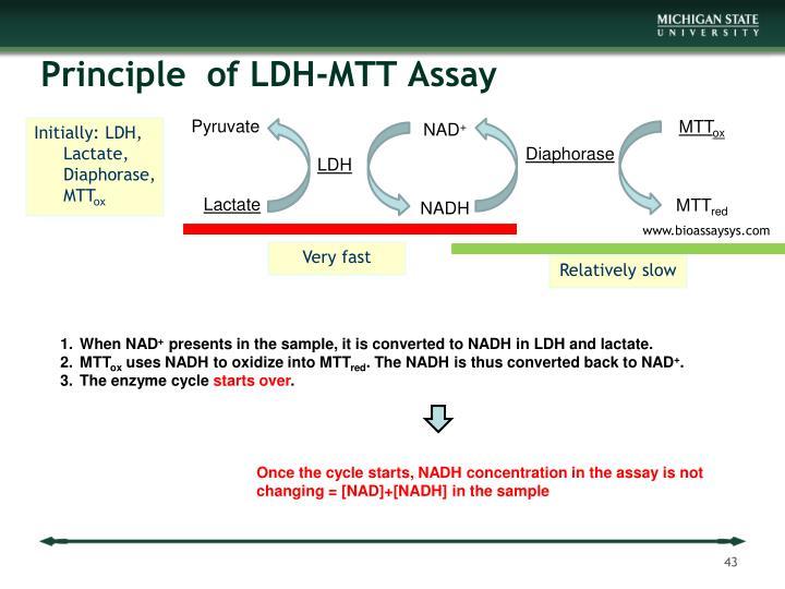Principle  of LDH-MTT Assay