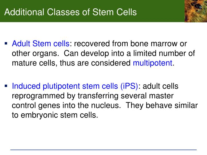 Additional Classes of Stem Cells