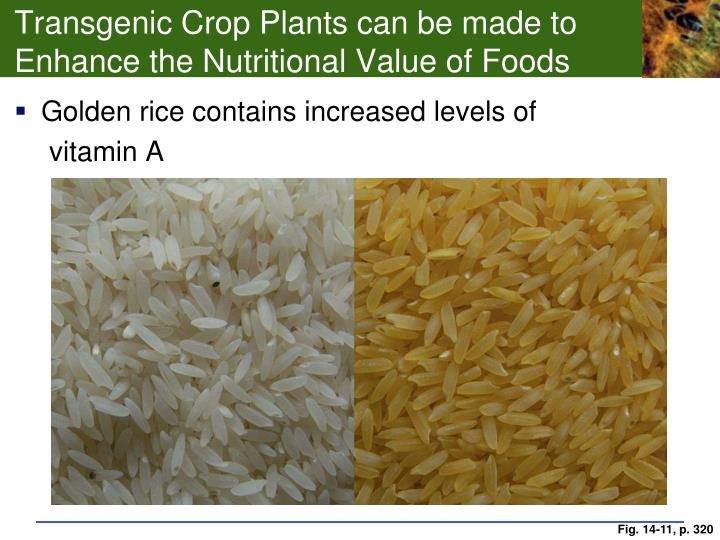 Transgenic Crop Plants can be made to Enhance the Nutritional Value of Foods