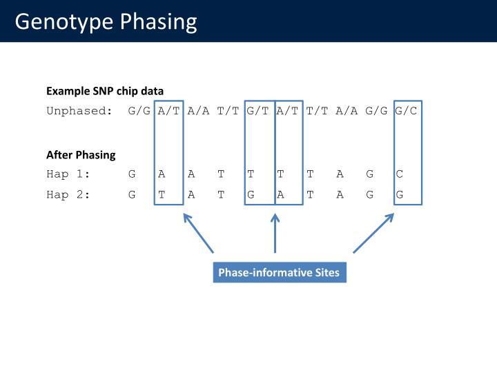 Genotype Phasing