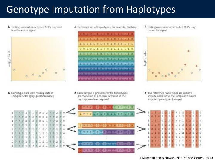 Genotype Imputation from Haplotypes