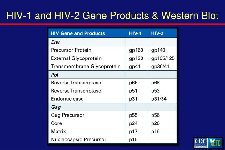 HIV-1 and HIV-2 Gene Products & Western Blot