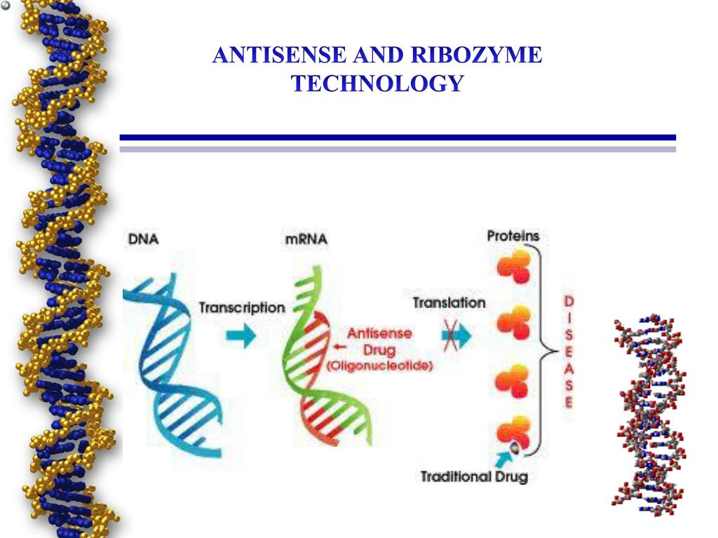 antisense rna technology and its applications pdf