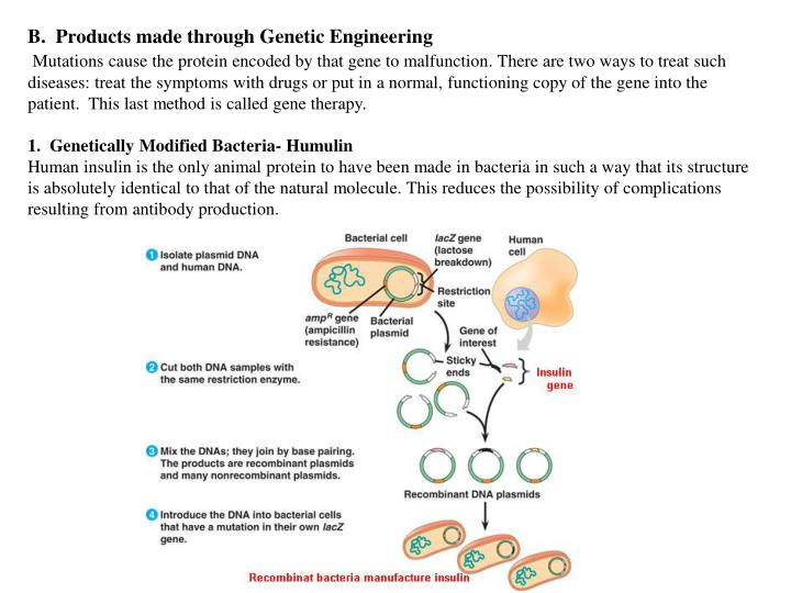 B.  Products made through Genetic Engineering