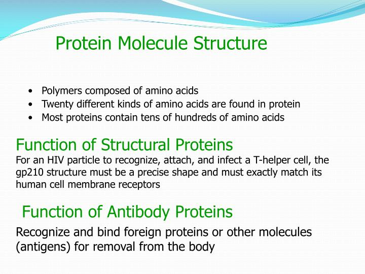 a study of proteins and their functions Instead, they will negatively feedback and bind to their own mrna, repressing r-protein synthesis and defines the structure and function of the protein.