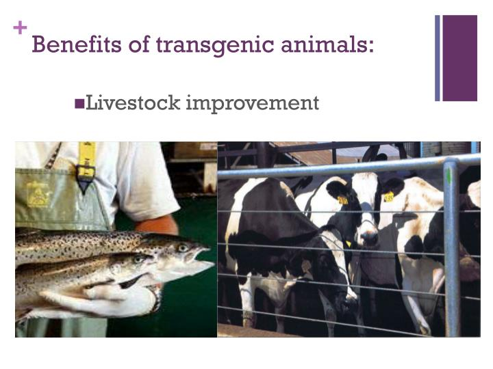 Benefits of transgenic animals: