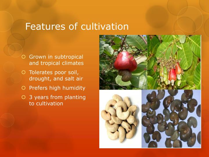 Features of cultivation
