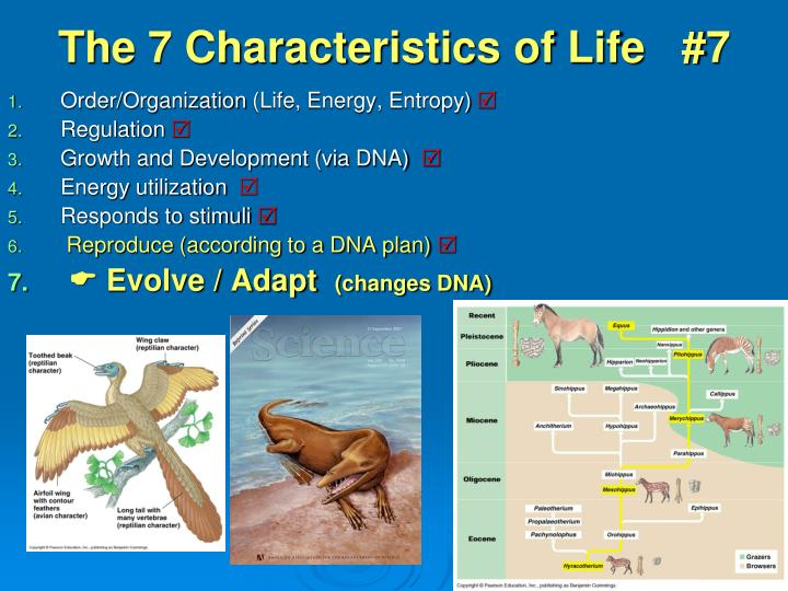 the 7 characteristics of life 7 n.