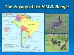 the voyage of the h m s beagle