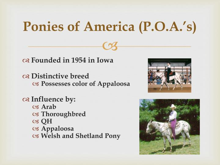 Ponies of America (P.O.A.'s)