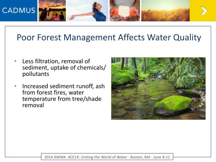 Poor Forest Management Affects Water