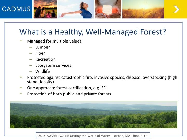 What is a Healthy, Well-Managed Forest?